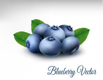 Blueberry with leaves. vector. Blueberry. Fresh berries with leaves isolated on white background. vector Stock Photo