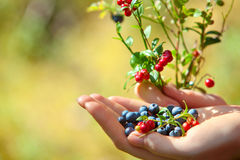 Blueberry and lingonberry Royalty Free Stock Photos