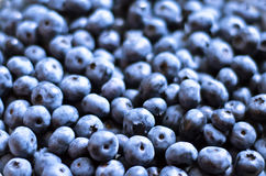 Blueberry. A lot of blueberry as a background Stock Images
