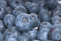Blueberry macro Stock Image