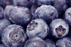 Blueberry Macro Stock Photos