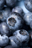 Blueberry macro background Stock Photo