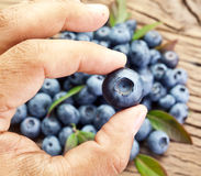 Blueberry in the man's hand. Stock Images