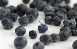 A blueberry among many Royalty Free Stock Images