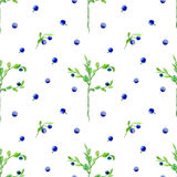Blueberry,moss,pine needle and leaves seamless pattern. Blueberry seamless pattern. Watercolor hand drawn illustration.White background Royalty Free Stock Images