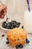 Blueberry Muffin Breakfast With Hand Spooning Blueberries Stock Photography