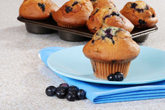 Blueberry muffin with fresh berries Royalty Free Stock Photos