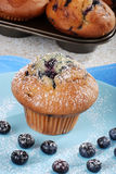 Blueberry muffin with icing sugar Royalty Free Stock Photos