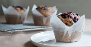 Blueberry Muffin. Stock Image