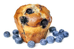Blueberry Muffin Isolated on White Stock Photography
