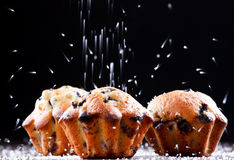 Blueberry muffins Stock Photography