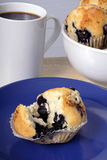 Blueberry muffins. Continental breakfast of coffee and muffins stock image