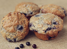 Free Blueberry Muffins Royalty Free Stock Photos - 28928048