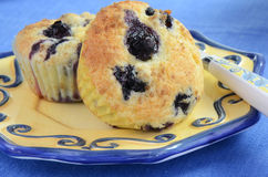 Blueberry muffins. Fresh warm blueberry muffins right out of the oven Royalty Free Stock Photos