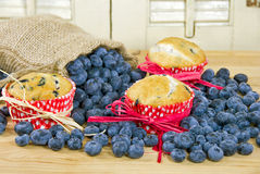Blueberry muffins with bag Stock Images