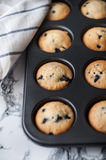Blueberry muffins. In baking dish Royalty Free Stock Photography