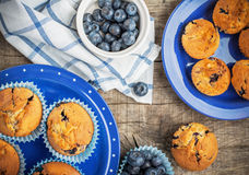 Blueberry muffins on Stock Images