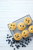 Blueberry Muffins Blueberries Background Royalty Free Stock Image