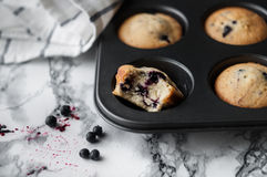 Blueberry muffins. Muffins with blueberries in baking dish Stock Photography