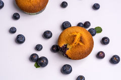 Blueberry muffins with blueberries on white background Royalty Free Stock Photography
