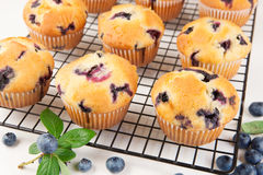 Blueberry muffins royalty free stock image