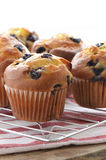Blueberry muffins. Fresh baked blueberry muffins on cooling rack Royalty Free Stock Image