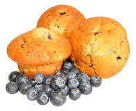 Blueberry Muffins With Fresh Blueberries Royalty Free Stock Image