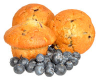 Blueberry Muffins With Fresh Blueberries Royalty Free Stock Photography