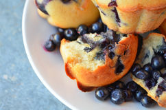 Blueberry muffins. Stock Image
