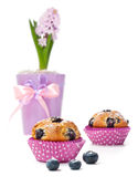 Blueberry muffins and hyacinth on white background Stock Photography