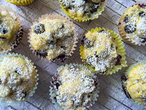 Blueberry muffins with powdered sugar Stock Photography