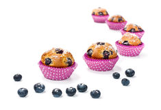Blueberry muffins isolated on white. Blueberry muffins and some berries on a white background royalty free stock image