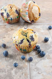 Blueberry Muffins on a tile countertop. Stock Images
