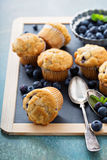 Blueberry muffins on a tray. Blueberry muffins on a chalkboard tray for breakfast Royalty Free Stock Photo