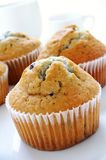 Blueberry muffins on white background Stock Photos