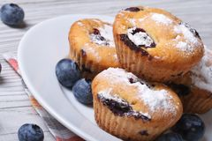 Blueberry muffins on a white plate closeup horizontal Royalty Free Stock Photography