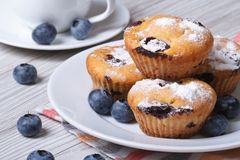 Blueberry muffins on a white plate and coffee closeup Royalty Free Stock Image
