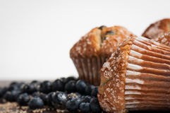 Blueberry Muffins with White Space Stock Images