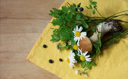 Blueberry and mushroom. Forest plants. The blueberry bushes and a small white mushroom lying on yellow cloth napkin and an old wooden surface Stock Photos