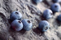 Blueberry (Northern Highbush Blueberry) fruits Stock Images