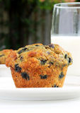 Blueberry oat bran muffin Royalty Free Stock Photos