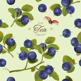 Blueberry pattern full Stock Image