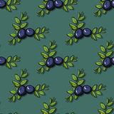 Blueberry Pattern Stock Image