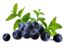 Blueberry_photo Photos stock