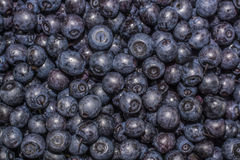 Blueberry. Photo crop of berries blueberry Royalty Free Stock Photo
