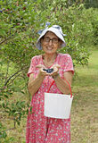 Blueberry Picker Royalty Free Stock Photography