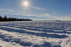 Blueberry plantation in winter season with mountains as background. Royalty Free Stock Photos