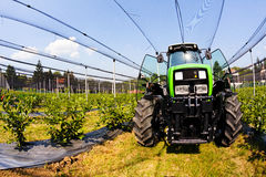 Blueberry plantations with mechanization Royalty Free Stock Photo