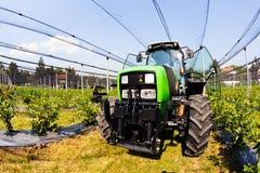 blueberry plantations with mechanization Stock Photo