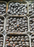 Blueberry in the plastic tray Stock Photography